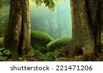 Forest Landscape With Old...