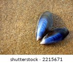 Two blue shells on wet sand - stock photo