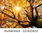 The Autumn Sun Warmly Shining...