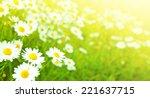 camomiles flowers field ... | Shutterstock . vector #221637715