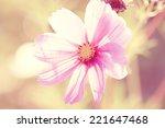 pink flower petals macro | Shutterstock . vector #221647468