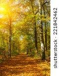 sunny autumn park | Shutterstock . vector #221842462