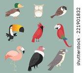 Cartoon Species Bird Collectio...