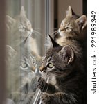 Two Tabby Kittens Are Reflecte...