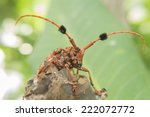 bug has a weevil. | Shutterstock . vector #222072772