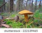 gyroporus cyanescens  | Shutterstock . vector #222139465