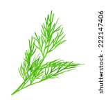 Dill  Vector Illustration