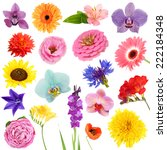Stock photo collage of beautiful flowers 222184348