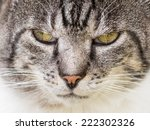 Grumpy Cat Portrait