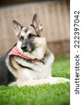 german shepherd   this is a... | Shutterstock . vector #222397042