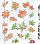 set of autumn leaves  chestnuts ... | Shutterstock .eps vector #222544582