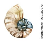 Hand Paint Watercolor Seashell...