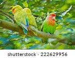 beautiful bird  love bird ...   Shutterstock . vector #222629956
