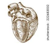 vector engraving heart on white ... | Shutterstock . vector #222683032