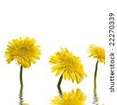 3 yellow sunflower with... | Shutterstock . vector #22270339