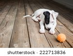 Stock photo puppy learns to play ball 222713836