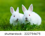 Stock photo funny baby white rabbit eating clover in grass 222754675