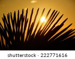 silhouette of palm leaves... | Shutterstock . vector #222771616