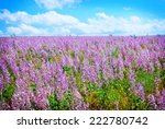 flowers in field | Shutterstock . vector #222780742
