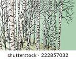 birch grove   Shutterstock .eps vector #222857032
