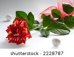 two colour rose | Shutterstock . vector #2228787