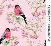 bullfinches birds on a branch.... | Shutterstock . vector #222905152