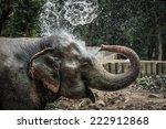 Thai Elephant Daily Bath