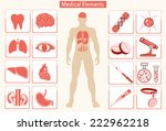 medical info graphics. human... | Shutterstock . vector #222962218