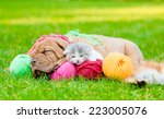 Stock photo bordeaux puppy dog and newborn kitten sleeping together on green grass 223005076