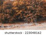 of forest landscape | Shutterstock . vector #223048162