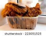 somali cat lie inside... | Shutterstock . vector #223051525