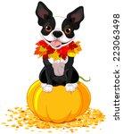 boston terrier sits on a pumpkin | Shutterstock .eps vector #223063498