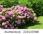 Great  Bush Of Pink Flower...