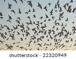 flock of birds | Shutterstock . vector #22320949