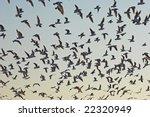flock of birds | Shutterstock . vector #22320949