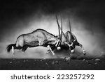 Stock photo gemsbok dual artistic processing 223257292