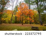 maple tree in the fall   Shutterstock . vector #223372795