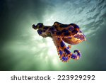 The Flying Blue Ringed Octopus.