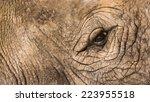 Rhinoceros Eye Close Up