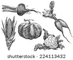 hand drawn vegetables | Shutterstock . vector #224113432