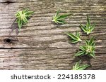 composition of fresh small... | Shutterstock . vector #224185378