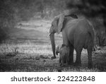 Stock photo mother elephant with baby 224222848