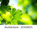 green leaves   Shutterstock . vector #22426651