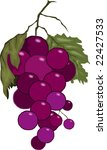 bunches of grapes with leaves  | Shutterstock .eps vector #22427533