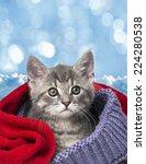 Stock photo cute kitten in a scarf 224280538
