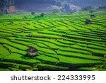 Green Terraced Rice Field In...