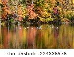 Foliage Pond With Mallard Duck...