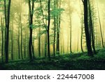 magic green colored foggy... | Shutterstock . vector #224447008