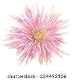 flower isolated on white...   Shutterstock . vector #224493106