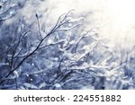 Winter  Snow On The Branches O...